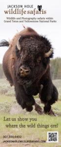 Jackson Hole Wildlife Safaris Brochure