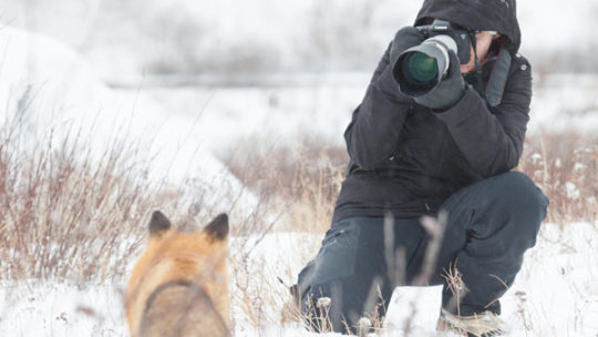 Carrie Wild Photographing a red fox