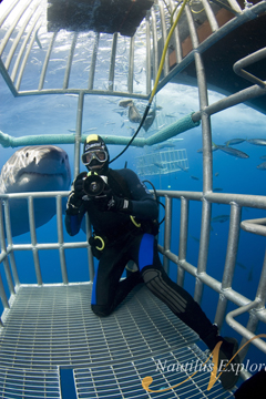 Diver in the water with a Great White Shark, Guadalupe Island, Mexico. Photo courtesy of Nautilus Explorer