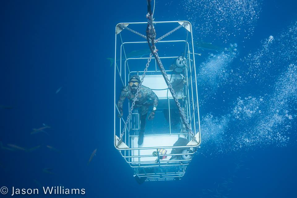 Divermaster Nelson being lowered down 30 feet in one of the submersible cages on the Belle Amie. Image by Jason Williams