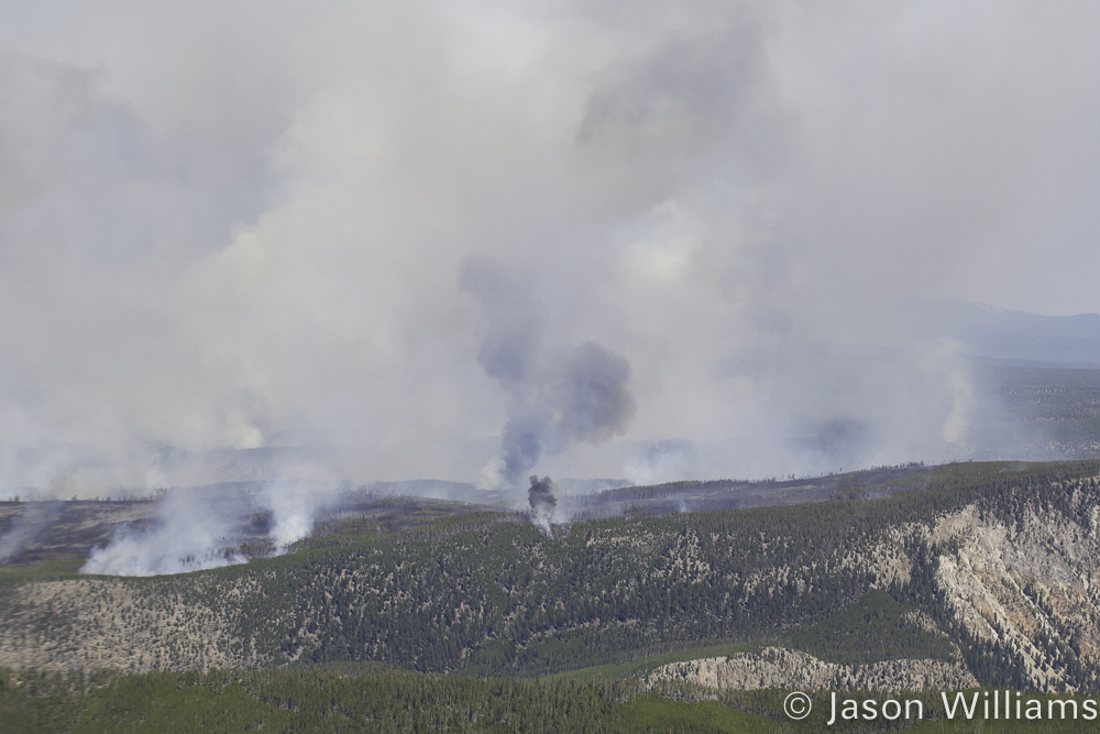 The southern boundary of the Maple Fire in Yellowstone National Park