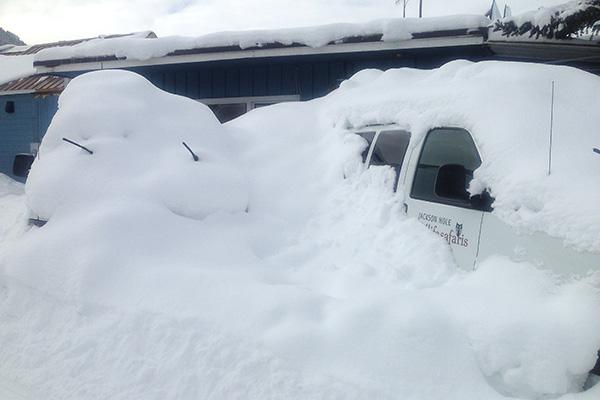 A Winter Snow Storm Buries A Jackson Hole Wildlife Safaris Van In The Parking Lot