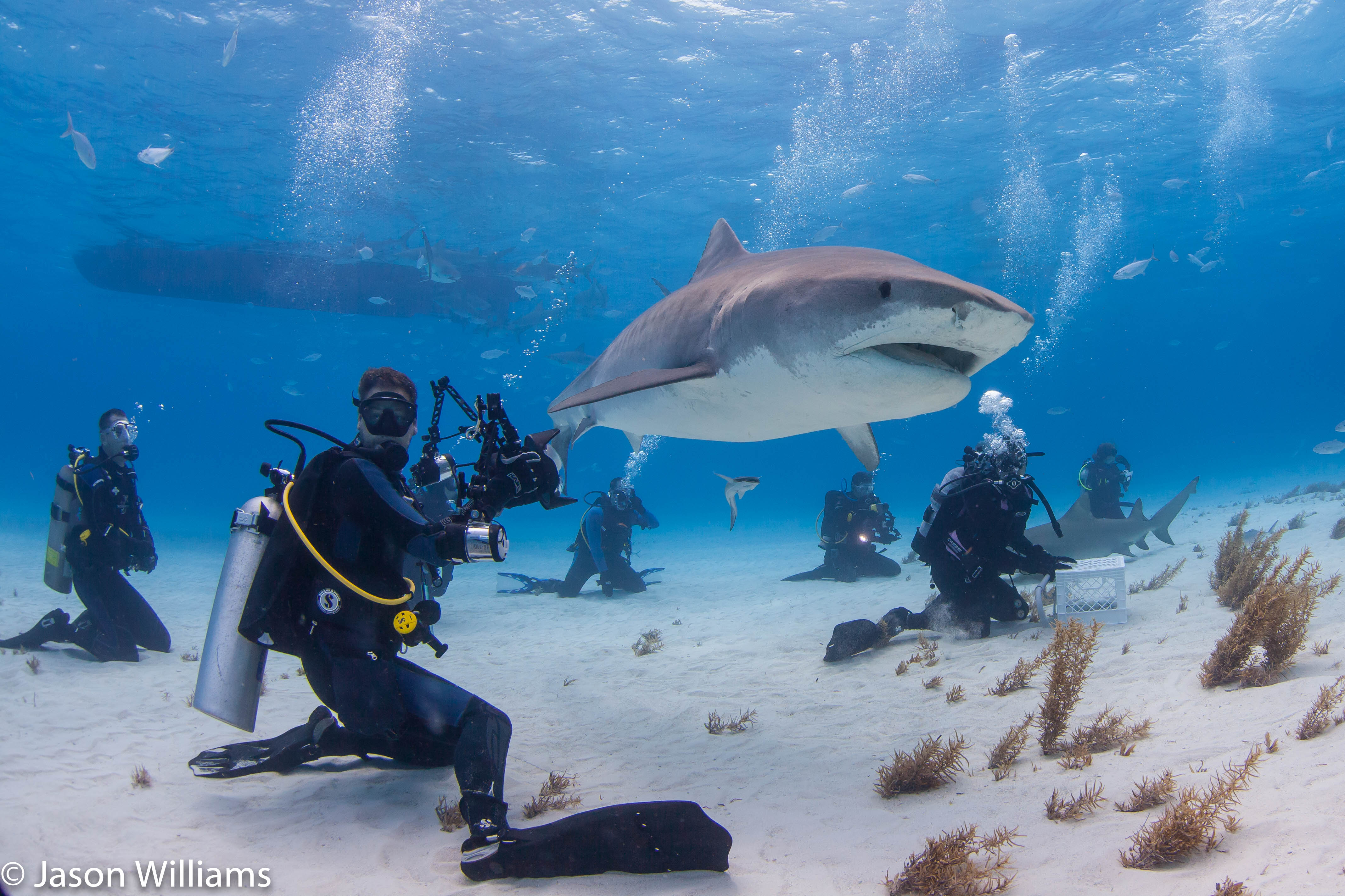 Shane Gross with his head on a swivel while photographing tiger sharks at Tiger Beach.