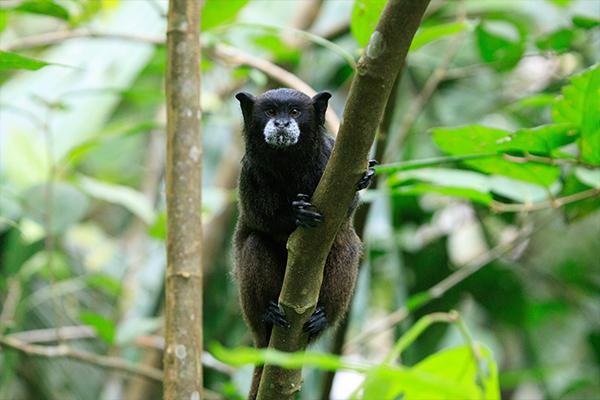 Ecuador - Amazon Rainforest Wildlife Tour   Jackson Hole