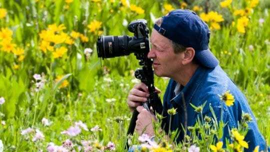 Photographing wildflowers jackson hole
