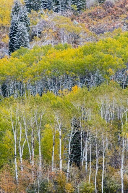 Fall colors can be dramatic in Jackson Hole