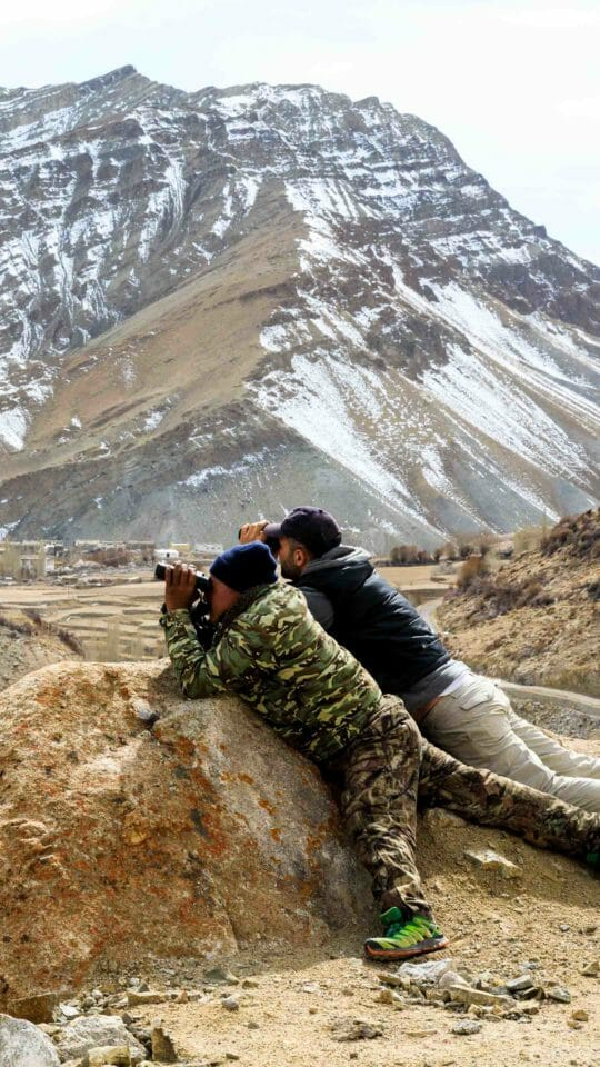two men using binoculars to view snow leopards