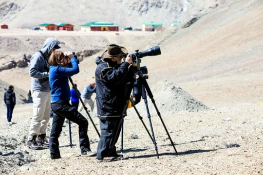 photographers capturing pictures of snow leopards
