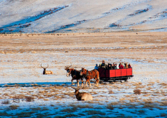 Sleigh Ride on National Elk Refuge Jackson Hole Wyoming