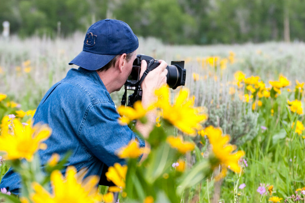Photographing wildflowers in Grand Teton National Park.