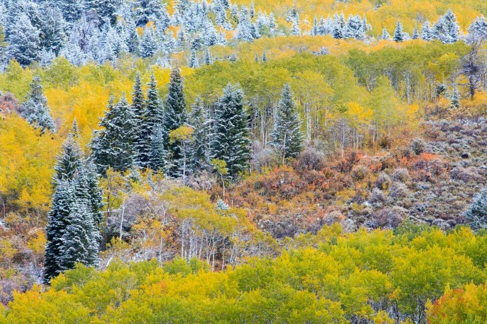 Fall colors are a photographic highlight in Jackson Hole during September.
