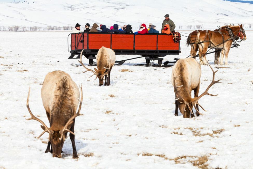 Elk refuge sleigh ride jackson hole