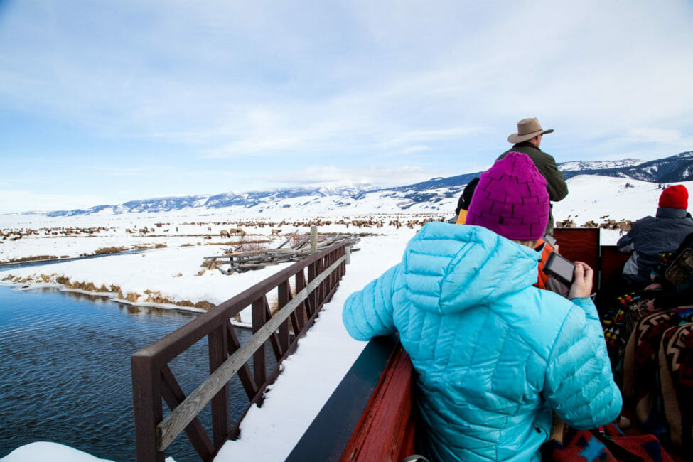 Horse drawn sleigh ride onto the National Elk Refuge