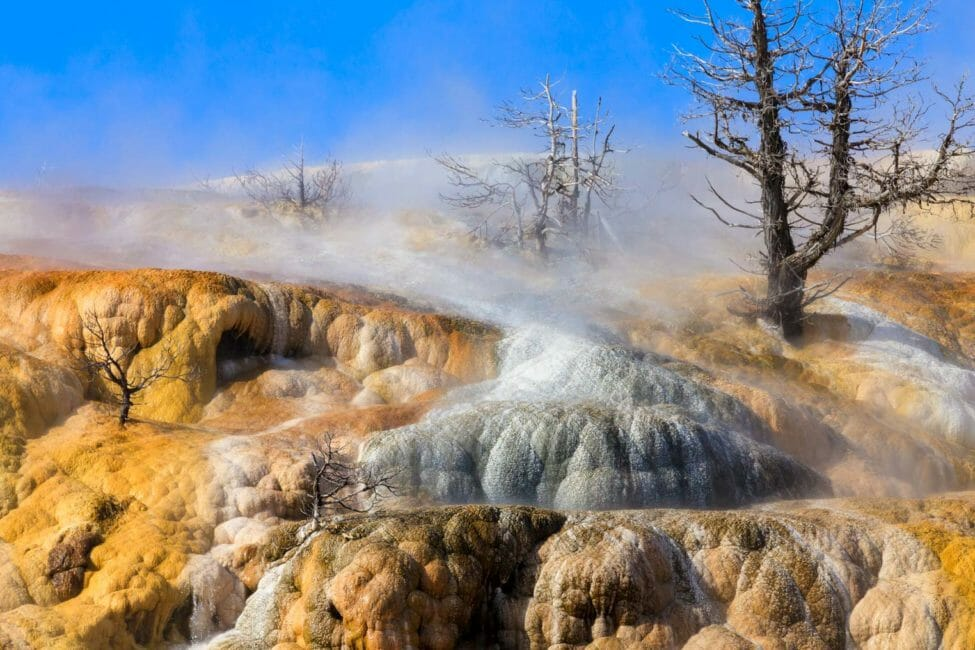 Mammoth Hotspring Yellowstone winter