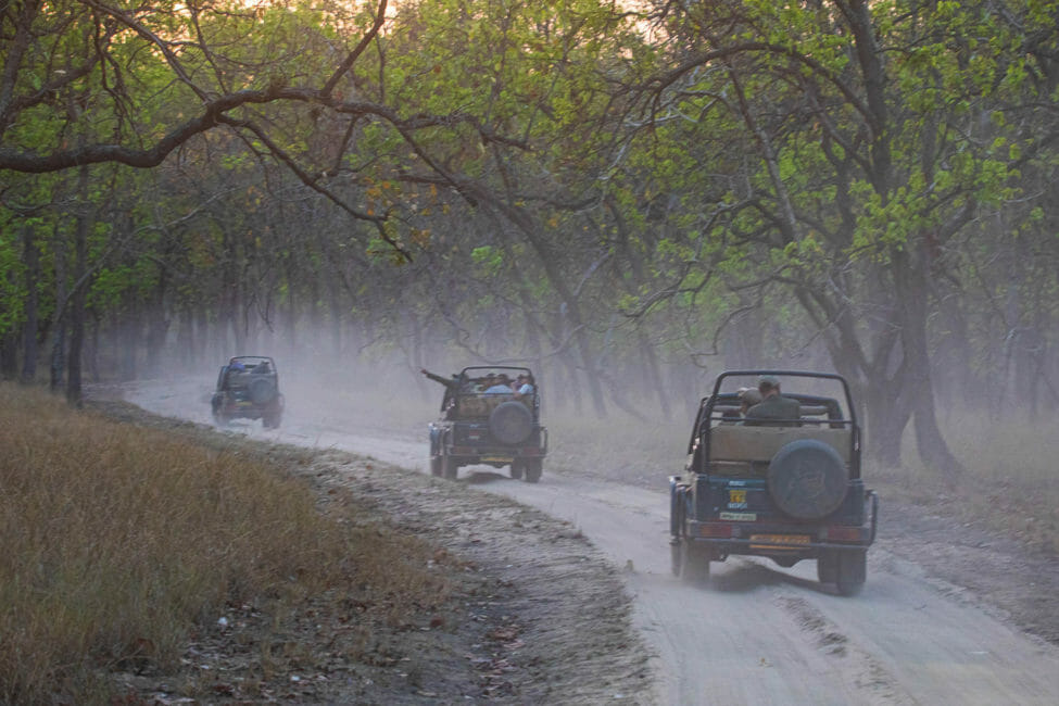 Safari Jeeps Make Their Way Through The Jungle In Madhya Pradesh