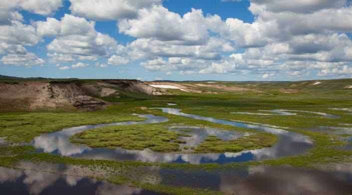 Water Returns To The Hayden Valley In Central Yellowstone In Early Summer, Creating A Vibrant Green Landscape